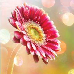 wenskaart second nature - gerbera bloem