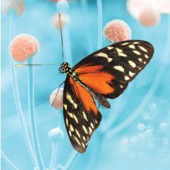 wenskaart second nature - vlinder op bloem - blauw