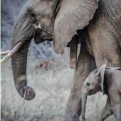 wenskaart second nature - olifant