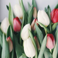 wenskaart second nature - tulpen