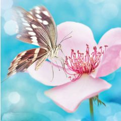 wenskaart second nature - vlinder op bloem - roze blauw