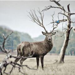wenskaart second nature - edelhert