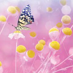 wenskaart second nature - vlinder op bloem - roze geel