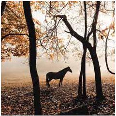 wenskaart second nature - paard bij bomen