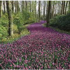 wenskaart second nature - bloemen in bos