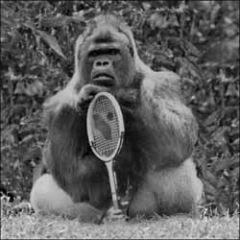 wenskaart woodmansterne - gorilla - aap