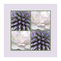 bloemenkaart muller wenskaarten - paars, roze