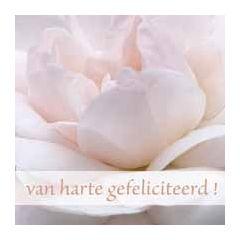 felicitatiekaart muller wenskaarten - van harte gefeliciteerd roze roos