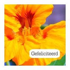 felicitatiekaart tekstvak - gefeliciteerd - bloem oranje, paars