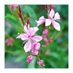 bloemenkaart - roze bloemen