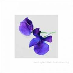 condoleancekaart - met oprechte deelneming - siererwt bloem