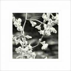 bloemenkaart - bruidsluier zwart-wit