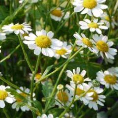 wenskaart - witte bloemen
