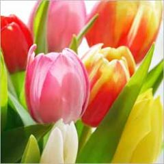 bloemenkaart - tulpen