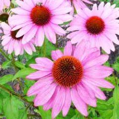 bloemenkaart - zonnehoed