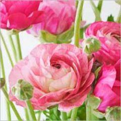 bloemenkaart - ranonkels