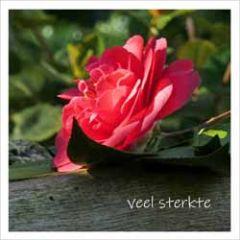 bloemenkaart muller wenskaarten - veel sterkte - rode bloem