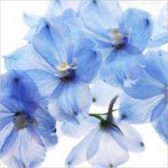 bloemenkaart muller wenskaarten - blauwe bloemen
