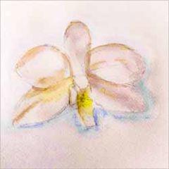 wenskaart claudia muller - orchidee