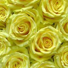 wenskaart muller wenskaarten - gele rozen