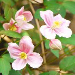 wenskaart muller wenskaarten - roze bloemetjes