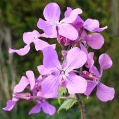 wenskaart muller wenskaarten - paarse bloemetjes