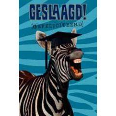 wenskaart geslaagd - gefeliciteerd - zebra