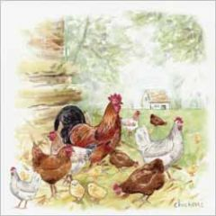 wenskaart - chickens - kippen