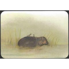 ansichtkaart jenny bakker - nijlpaard