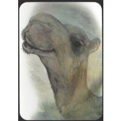 ansichtkaart jenny bakker - kameel