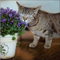 wenskaart woodmansterne - kat ruikt aan plant