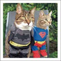 wenskaart woodmansterne - su-purr-heroes - katten