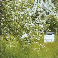 wenskaart woodmansterne - appelbloesem