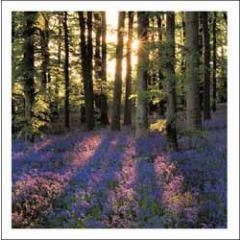wenskaart woodmansterne - bos in de lente blue bell