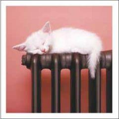 wenskaart woodmansterne - kitten op radiator