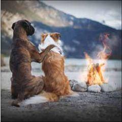 wenskaart woodmansterne - honden bij kampvuur