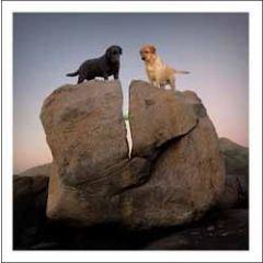 wenskaart woodmansterne - honden en bal