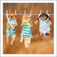 wenskaart woodmansterne - honden en kat aan waslijn