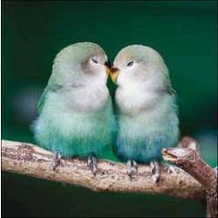 wenskaart woodmansterne - lovebirds