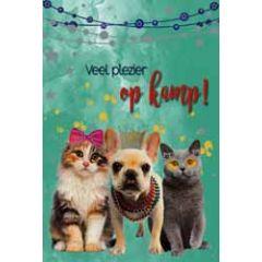 wenskaart - veel plezier op kamp - katten en hond