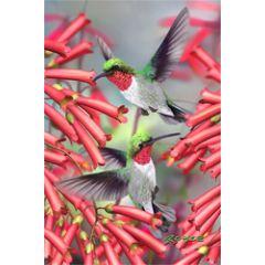 3d ansichtkaart - lenticulaire kaart - kolibries