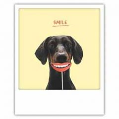 ansichtkaart instagram pickmotion - smile - hond