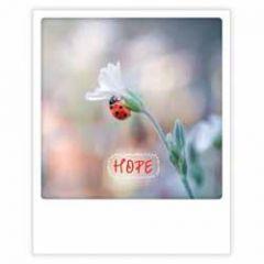 ansichtkaart instagram pickmotion - hope - lieveheersbeestje