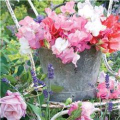 wenskaart - bloemen in pot