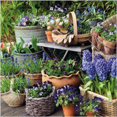 wenskaart - voorjaarsbloemen viooltjes