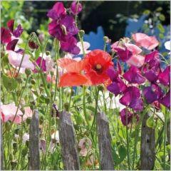 bloemenkaart - lathyrus en papaver - gardeners world