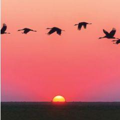 wenskaart second nature - zonsondergang en vogels