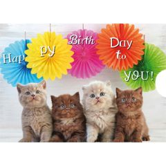 verjaardagskaart met schuifsysteem - happy birthday to you - kittens