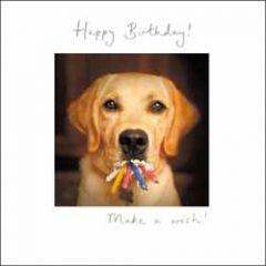 verjaardagskaart woodmansterne - happy birthday, make a wish - hond