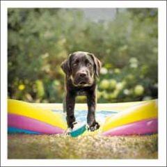 wenskaart woodmansterne - hondje in opblaasbad